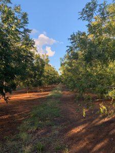 Hillcrest Game Estate Pecan Nuts