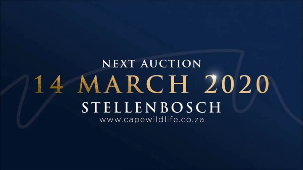 CWG 2020 auction