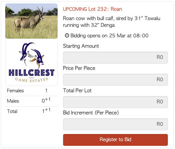 Bona Bona Hillcrest Lot 232 Timed Auction Roan Cow Bull Calf daughter of 31 Tswalu running with 32 Denga 1 1 2 Hillcrest Y T70